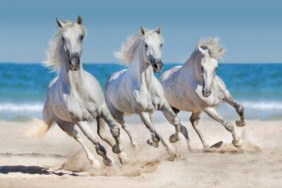 Plakát Koně běží podél pobřeží