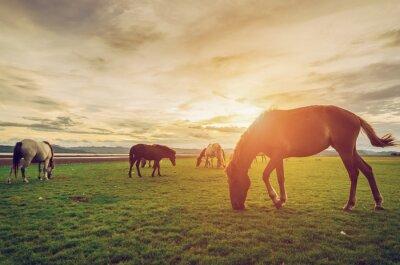 Plakát Koně na poli tráva s slunce ročník a retro stylu