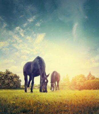 Plakát Koně pasoucí se na podzim louce na pozadí stromů a nebe