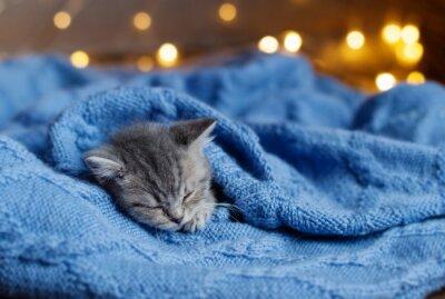 Plakát koťátko spí pod dekou
