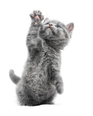 Plakát Kotě
