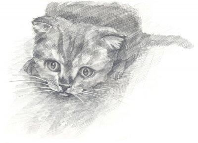 Plakát kotě černé a white.Painted ruce. Grafický styl.