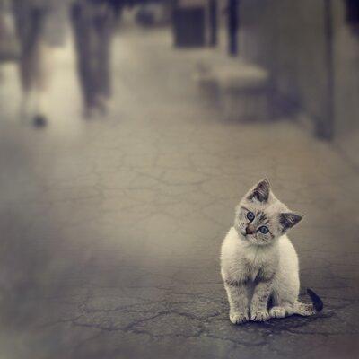 Plakát Kotě Na ulici