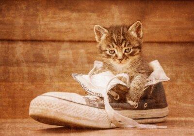 Plakát Kotě sedí v botě, vinobraní image