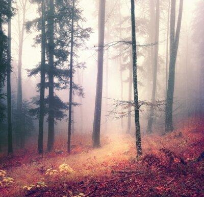Plakát Kouzelná podzim sezóna barva les strom na pozadí s zářivě oranžové červené značce. Krásná sezónní lesní.