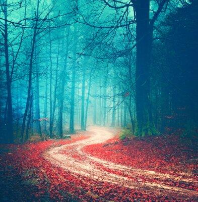 Plakát Kouzelná vinobraní lesní cesta