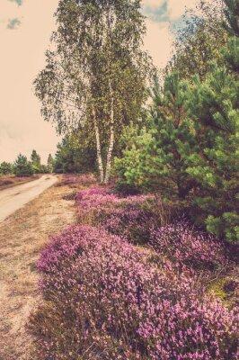 Plakát Krásná krajina lesů s kvetoucí vřes u venkovské silnici