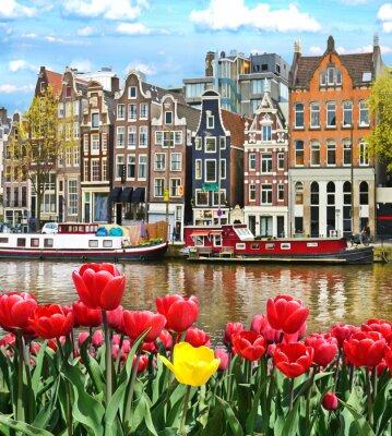 Plakát Krásná krajina s tulipány a domy v Amsterdamu, Holandsko