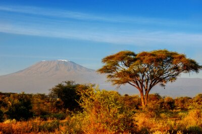 Plakát Krásné horské Kilimanjaro po východu slunce v dopoledních hodinách, Keni, Národní park Amboseli, Afrika