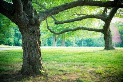 Plakát Krásné letní stromy a trávy v parku nastavení