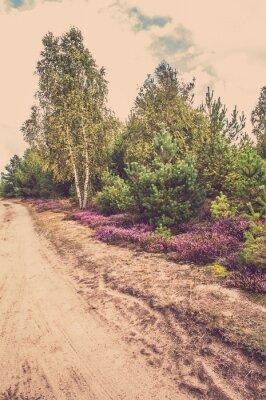 Plakát Krásné venkovské krajiny s kvetoucí vřes