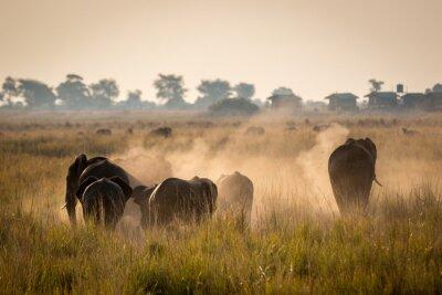 Plakát Krásné volně žijících živočichů v národním parku Chobe, Botswana