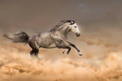 Plakát Krásný kůň běžet tryskem v prachu