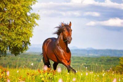Plakát krásný kůň skoky na zelené louce