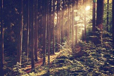 Plakát Krásný pohádkový les