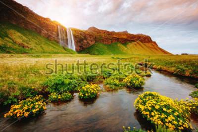 Plakát Krásný pohled na kvetoucí zelené pole na slunci. Dramatická a nádherná scéna. Oblíbená turistická atrakce. Místo místo slavný Seljalandsfoss vodopád, Ostrov, Evropa. Objevte svět krásy.