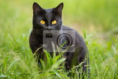 Fotografie černé kočky