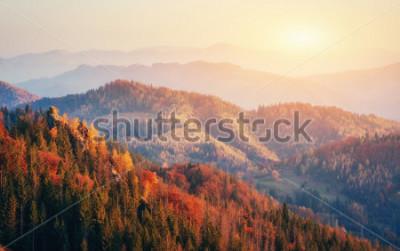 Plakát Krásný výhled na les za slunečným dnem. Podzimní krajina. Karpaty. Ukrajina, Evropa