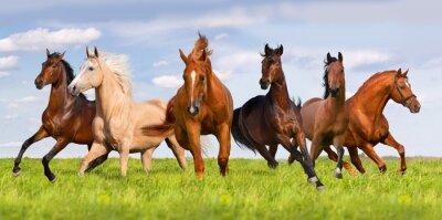 Plakát Kůň stádo dráha v krásné zelené louce