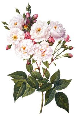 Plakát květ ilustrace