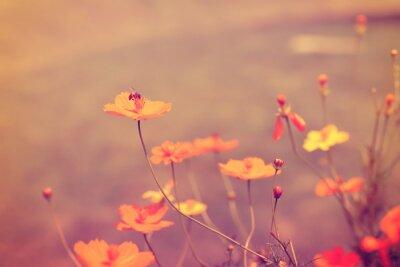 Plakát květina