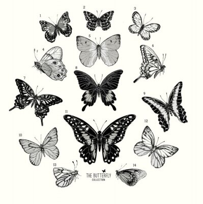 Plakát Large Collection of Butterflies, hand drawn set isolated.Vector illustration