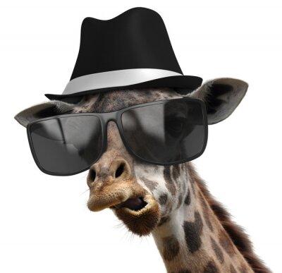 Plakát Legrační zvíře portrét žirafa s odstíny a fedora