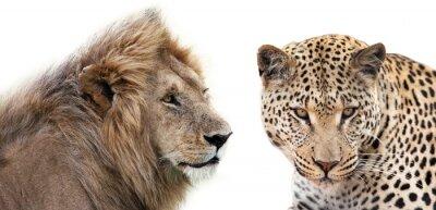Plakát Leone e Leopardo Insieme