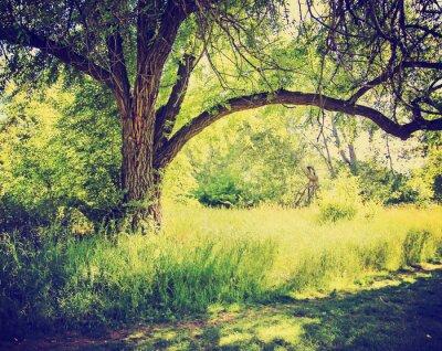 Plakát les nebo park se stromy s podzimní listí provedena s RETR