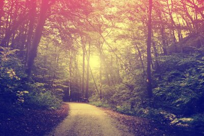 Plakát Lesní cesta