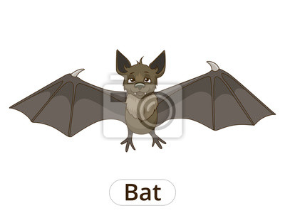 Plakát Lesní zvíře netopýr kreslené vektorové ilustrace