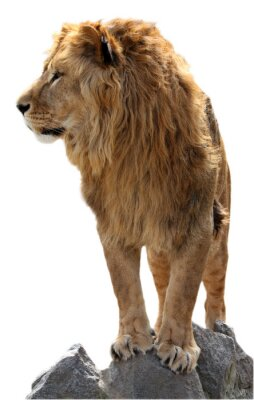 Plakát Lev na několika kameny