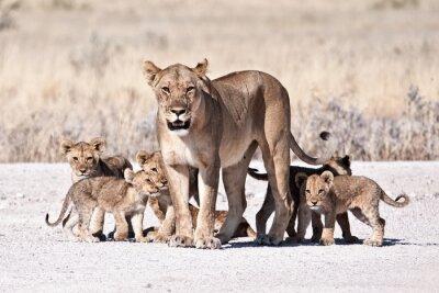 Plakát Lioness and cub