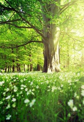 Plakát Listnatý les
