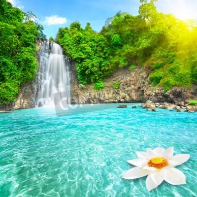 Plakát Lotosový květ v vodopádu bazénu