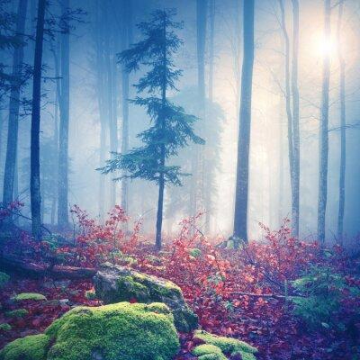 Plakát Magické světlo v lese mlhavého s slunce