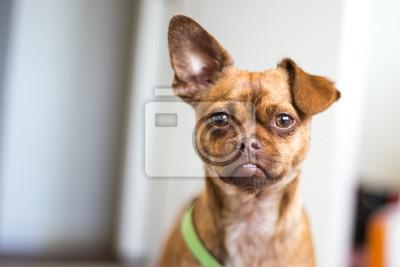 da35ac1c214 Plakát Malé hnědé pes