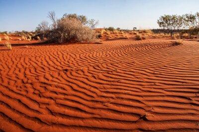 Plakát Malé rostliny v poušti západní Austrálie
