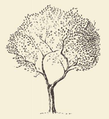 Plakát Mladí olivovník ilustrační vektoru hand drawn