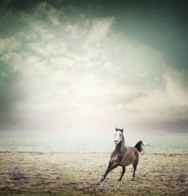 Plakát Mladý kůň běží na pastvinách a pozadí oblohy, tónovaný