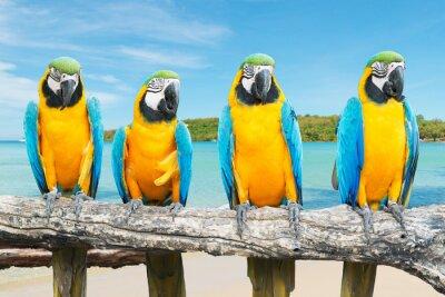 Plakát Modrá a zlatá papoušek na tropické krásné pláže a moře