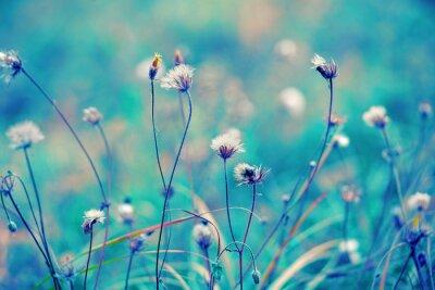 Plakát Modrá ročník bylinný pole
