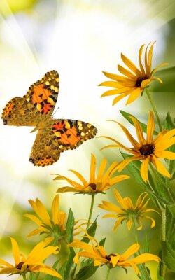 Plakát motýl a květiny v zahradě zblízka