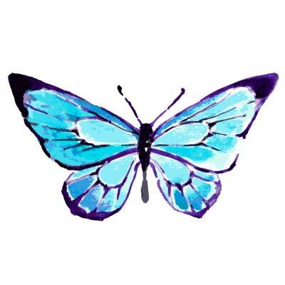 Plakát motýl, design akvarel