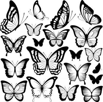 Plakát motýli černé siluety