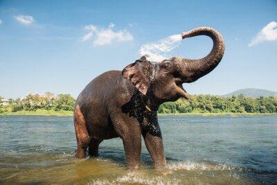 Plakát mytí Slon v řece
