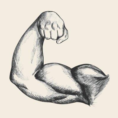 Plakát Náčrt ilustrace svalové lidského mužského pravé paže