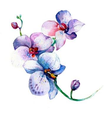 Plakát Nový pohled na orchidej akvarel ruky čerpá pro pohlednici na bílém pozadí