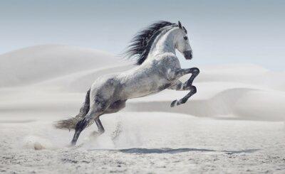 Plakát Obrázek představující cvalu kůň bílý