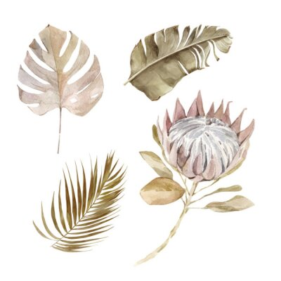 Plakát Old dry swirling tropical leaves and flower watercolor vector illustration isolated on the white background. Closeup view palm leaf in boho style. Hand drawn leaves and protea in sepia color scheme.